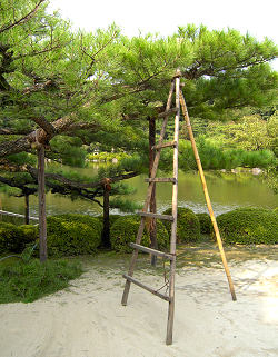Pine and traditional ladder in the Heian Shrine garden, Kyoto
