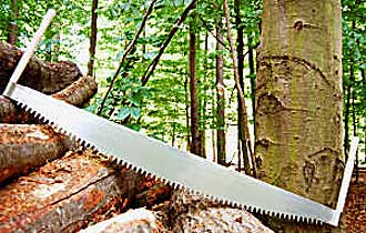 Two-man Crosscut Saw by Thomas Flinn