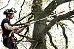 Garden Saws, Extension Poles for work in difficult-to-reach Areas, Fruit Picker